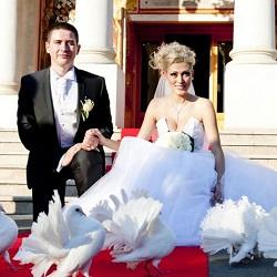 Porumbei albi nunta ceremonie religioasa biserica bucuresti