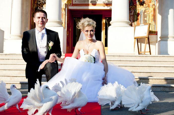 Porumbei albi nunta
