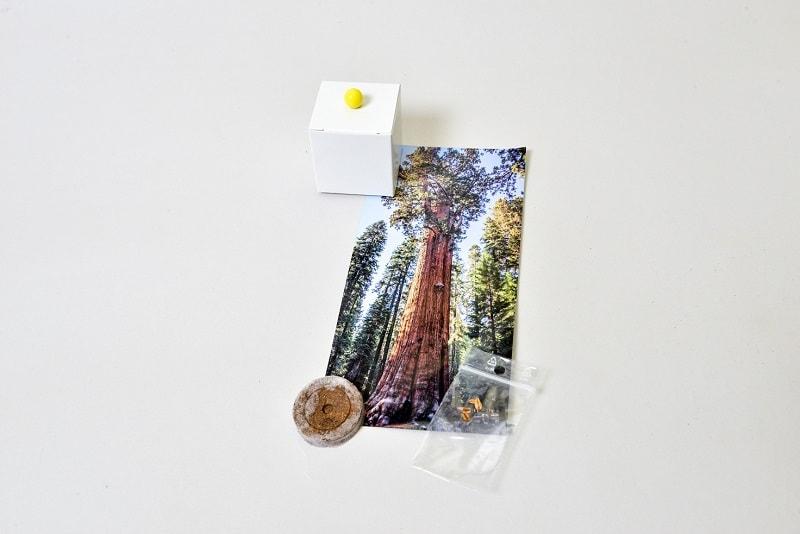 marturii nunta sequoia bucuresti